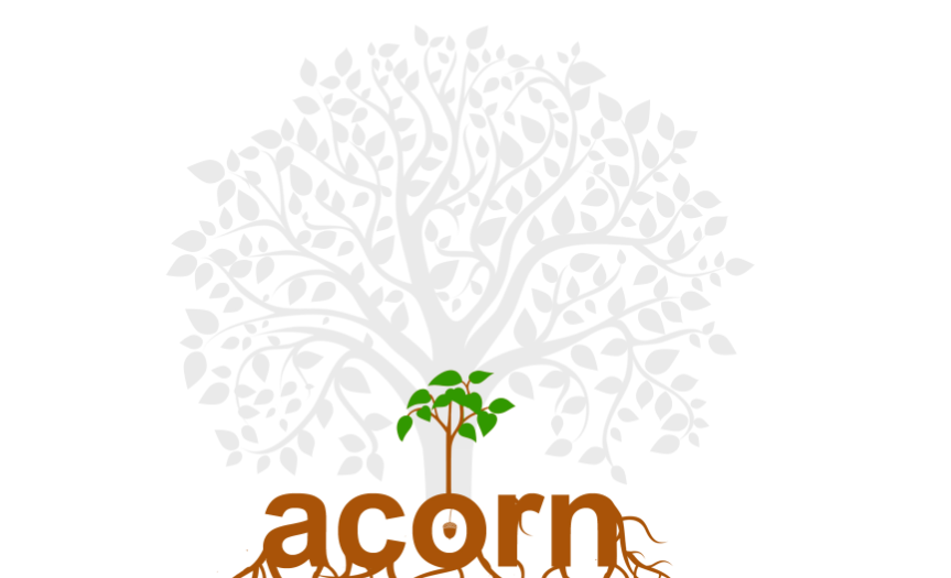 Acorn to oak tree: finding my potential and purpose | strength ...